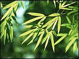竹林深處 青蔥世界 6 - [wall001.com]_bamboos_GA082.jpg